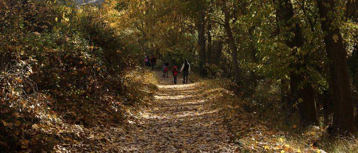 Senderistas por GR-10 por bosque de ribera en otoño