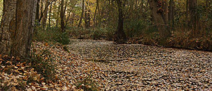 Río Dulce en otoño de Pelegrina