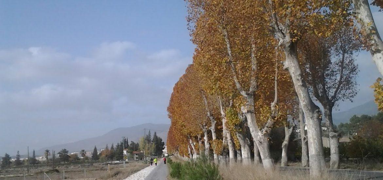 Árboles de hoja caduca junto a camino asfaltado