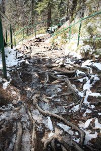 Camino surcado por raíces