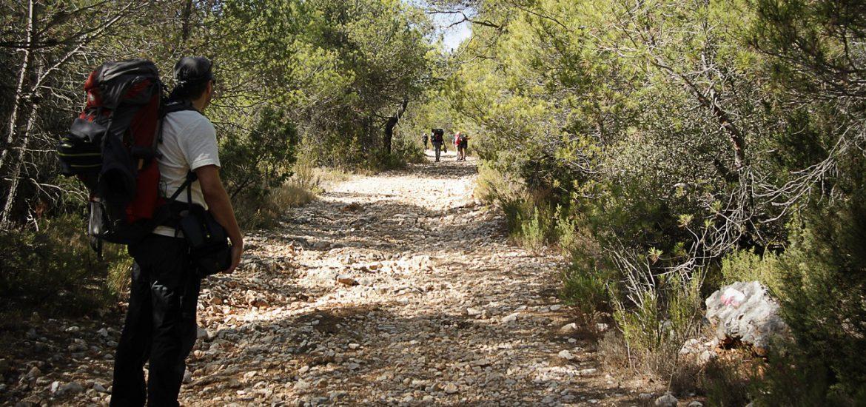 Grupo de senderistas por pista forestal