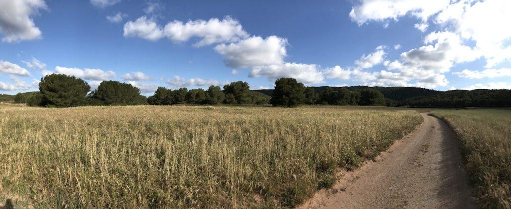 Camino entre cultivos
